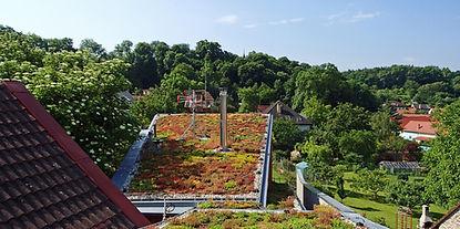 P6060430 Extenzivní zelená střecha na Do
