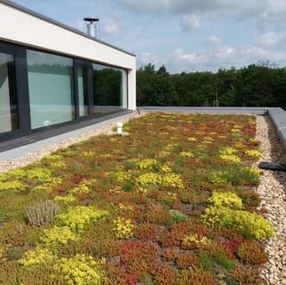 Zelené střechy