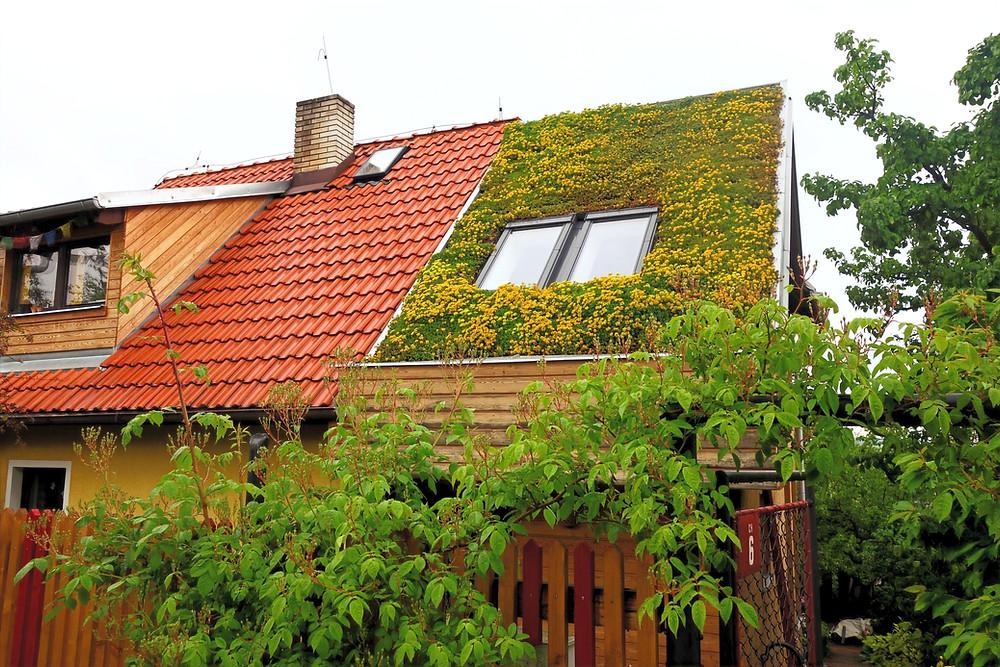 Šikmá střecha na obrázku je pokrytá nenáročnými rozchodníky, které vydrží dlouhou dobu bez zalévání i v horkých letních měsících.