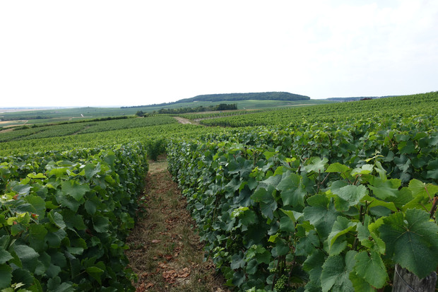 Efforts for the future of Champagne by Comité Champagne
