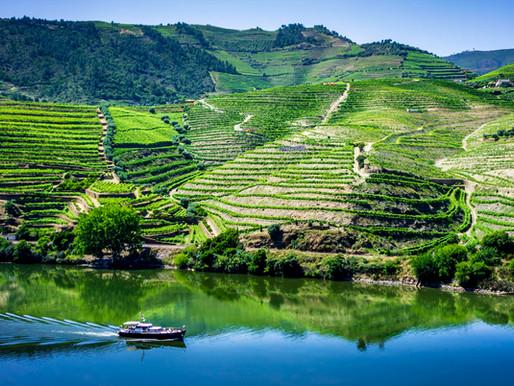 Deep Dive into Porto Wine Region with Ramos Pinto