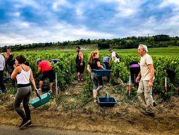 収穫の秋「良質なブドウなくして、美味しいワインなし」
