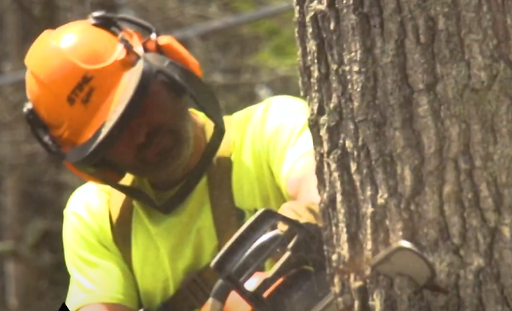 cutting tree.png