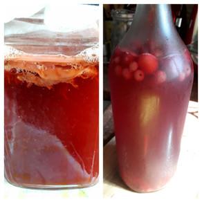 תה קמבוצ'ה - kombucha Tea