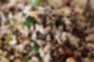 סלט שעועית לוביה ואורז בר