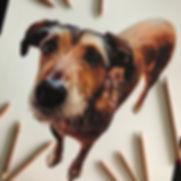 Dog commission.jpg