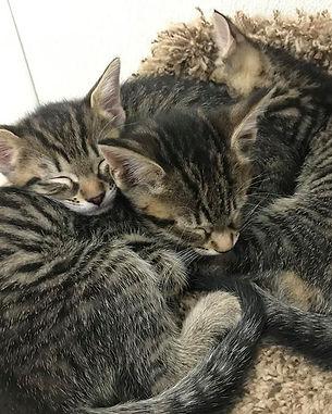 kittens-flip.jpg