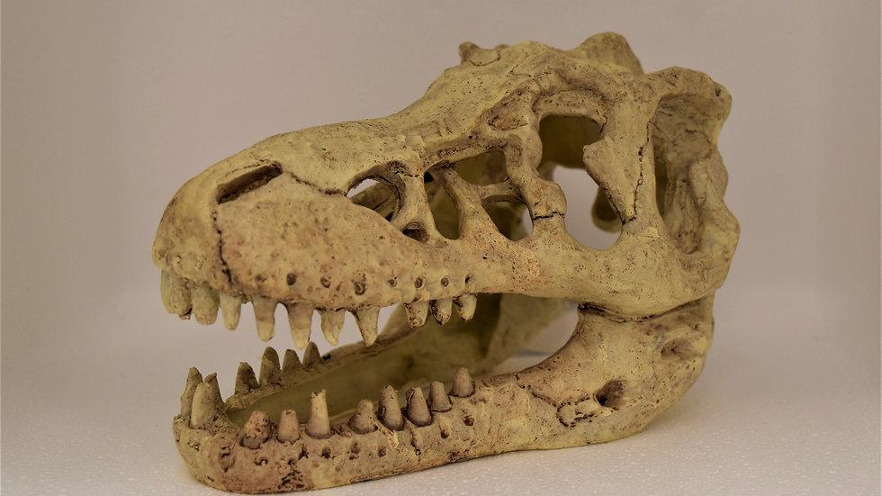 Hugo dinosaur skull