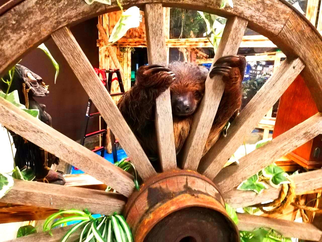 保護動物カフェねこのす2階はジャングルに!