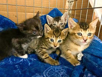 保護猫カフェ.jpg