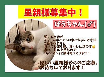 保護猫 里親募集.JPG