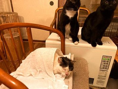 保護猫、保護動物.jpg