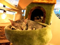 ほごねこカフェ、ねこのす、猫の巣