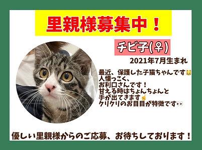 保護猫ほごねこ里親募集中。ねこのす猫の巣NEKONOSネコノス千葉東金.保護猫、保護犬の保護依頼も「ねこのす」.JPG