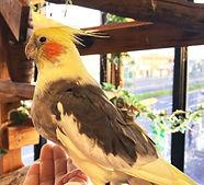 ねこのす 小鳥 保護動物 猫の巣_edited.jpg
