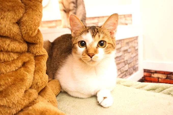ねこのす保護動物カフェ。保護猫カフェ