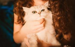 ねこのす保護猫里親