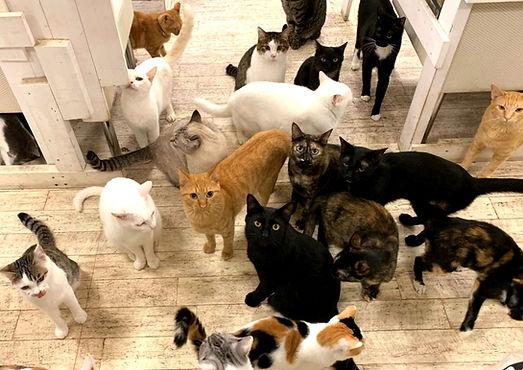保護猫たち ねこのす ネコノス.jpg