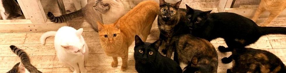 保護猫たち ねこのす ネコノス_edited_edited.jpg