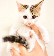 ねこのす、猫カフェ、保護猫、動物園.jpg