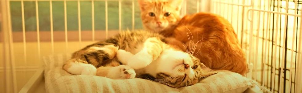 ねこのす保護猫の里親募集・猫の巣・ネコノス.JPG