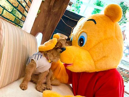 くまたろうと保護犬、猫カフェ、動物園、千葉.jpg