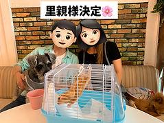 ねこのす保護動物カフェ.jpg
