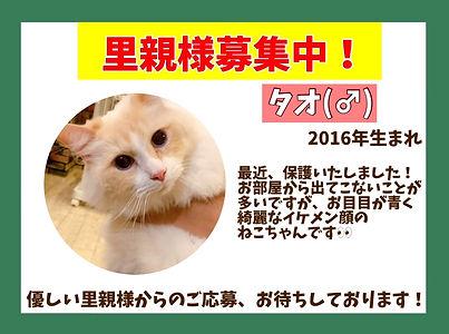 保護猫ほごねこ里親募集中。ねこのす猫の巣NEKONOSネコノス千葉東金.JPG