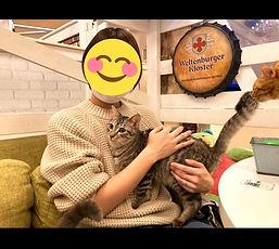 保護猫カフェねこのす.jpg