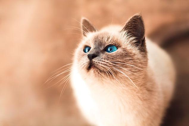 保護猫 ねこのす ほごねこてれび