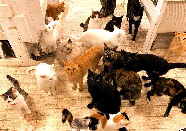 保護猫たち ねこのす ネコノス猫の巣.jpg