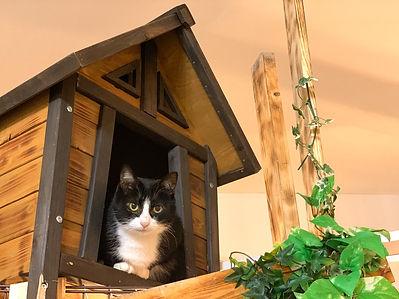 保護猫、猫カフェ、動物園、千葉東金.jpg