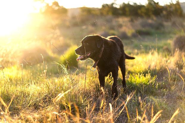 ねこのす 保護犬 動物保護施設.jpg