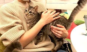 保護猫 ねこのす 猫の巣 里親様_edited_edited.jpg
