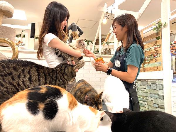 ねこのす 猫の巣 動物保護施設.jpg