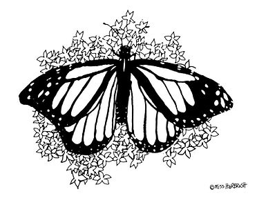 coloring book BUTTERFLY.jpg