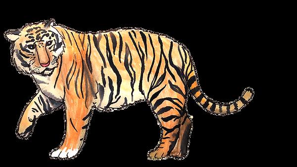 Tiger Tigre PNG.png