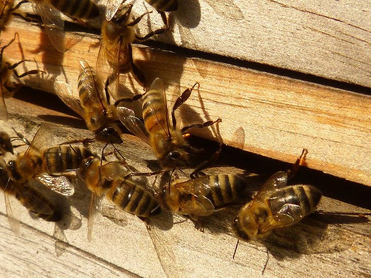 bees-60184_1920.jpg