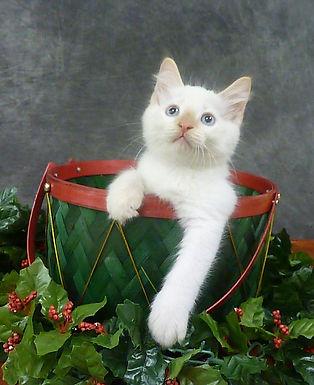 yoshi basket.jpg
