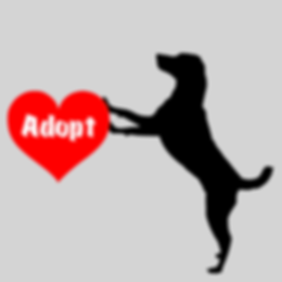 DogAdopt.png