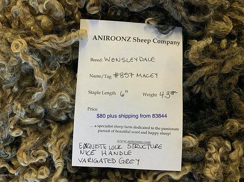 857 Macey- Wensleydale raw fleece