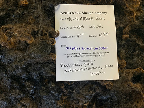 "839 ""Major"" Wensleydale raw fleece"