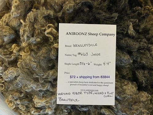 6163 Janie - Wensleydale raw fleece