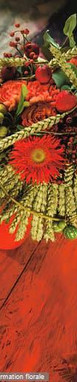 Compositions automnales et travaux autour de la plante