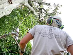 Cime Verte chantier abatage 2019 Julien