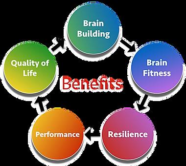 Brain Building Process.png