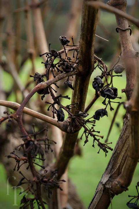 singlefile winery