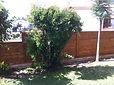 לוחות עץ לגדר מעץ אורן , ניתן להשתמש בכמה סוגי עצים , עץ אורן 3 על 15 , עץ אורן 2 על 15 , עץ ארון 2 על 10