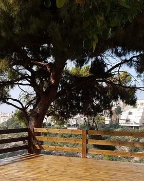 """עץ לדק אורן 3 על 14 , מחיר כולל מע""""מ 10.80 ש""""ח , עץ אורן איכותי לדק במחסן הצים עץ מרקט"""