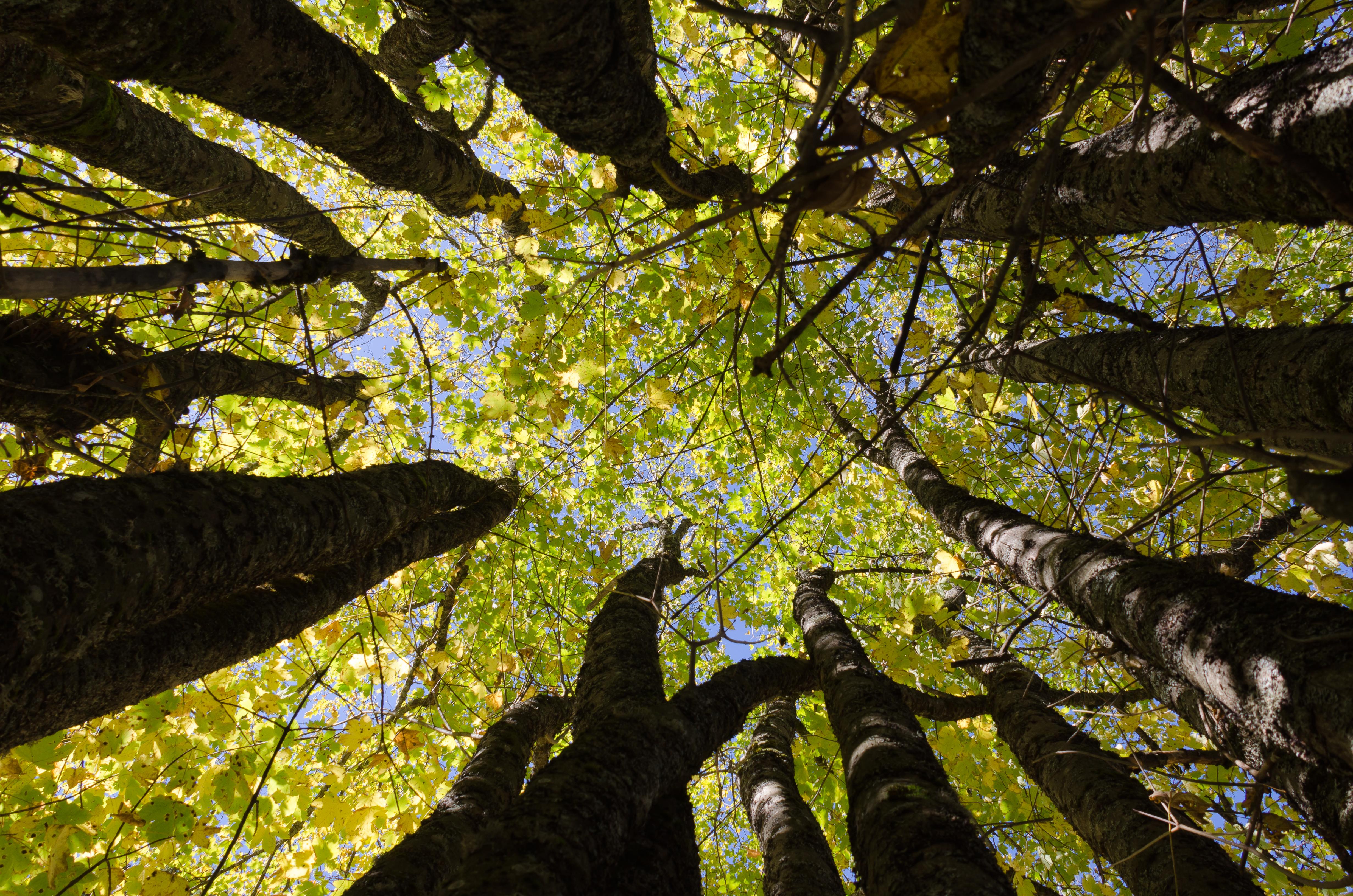 Under_trees
